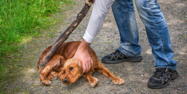 What Are the Penalties for Abusing a Dog in Texas?