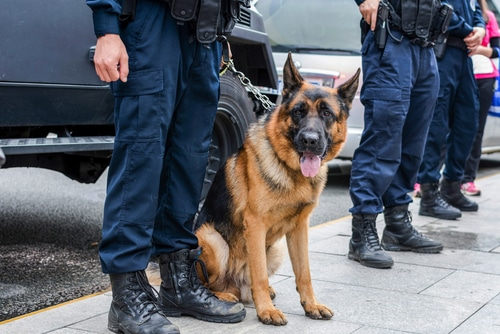 Can Police Use Drug Sniffing Dogs to Search Your Car