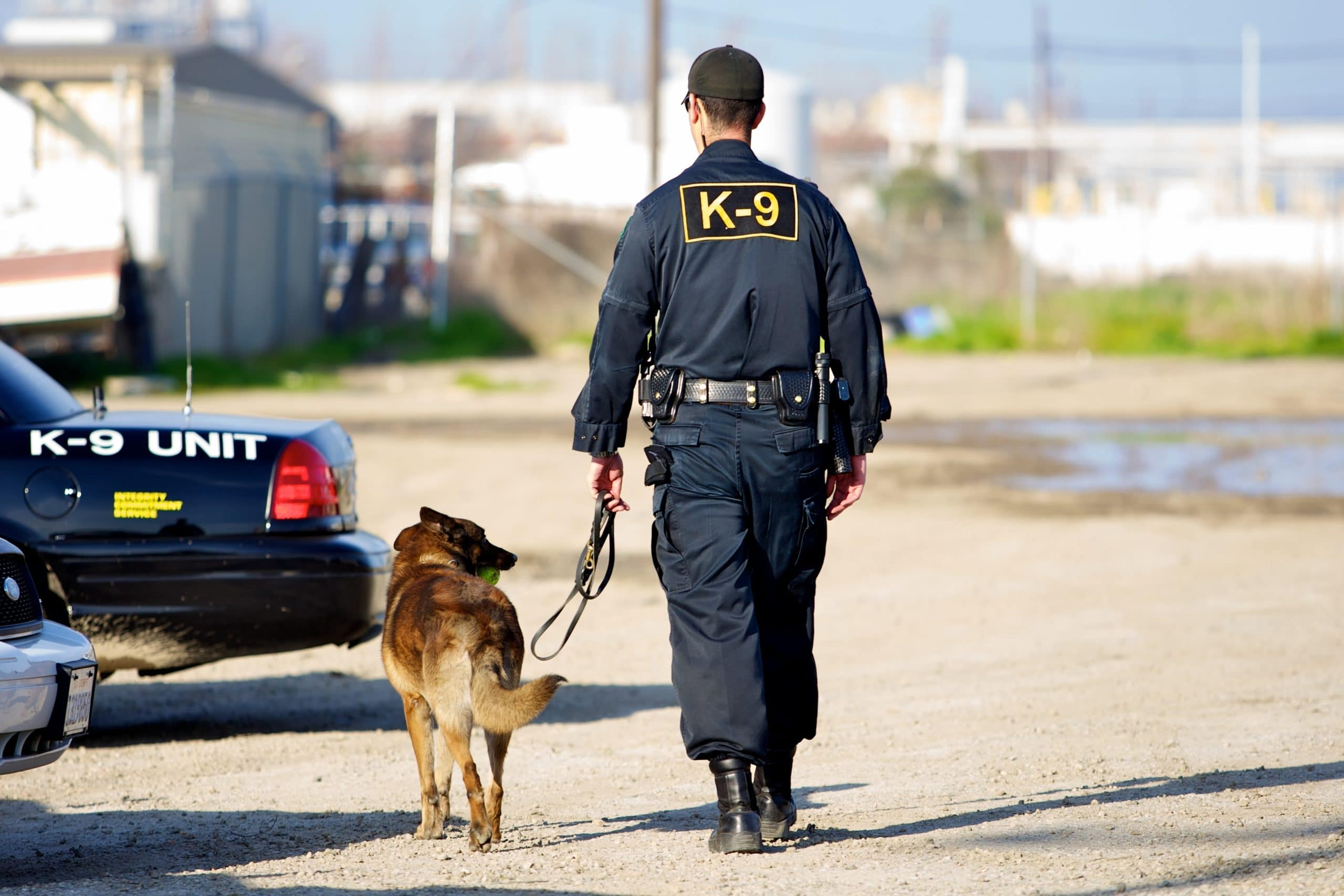 When Can Police Use a Drug Sniffing Dog? - Broden & Mickelsen LLP